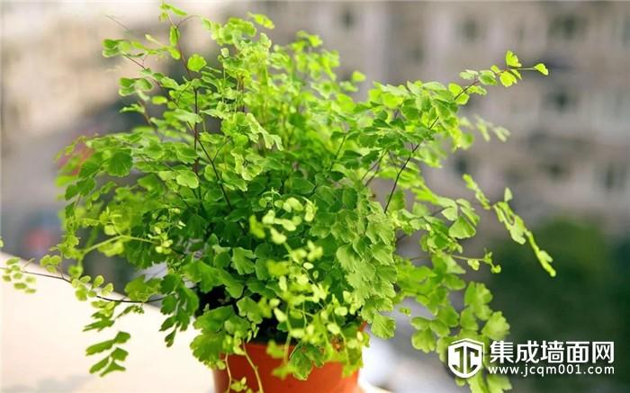 """夏季室内异味大?奥华墙品教你养这""""3种植物""""!"""