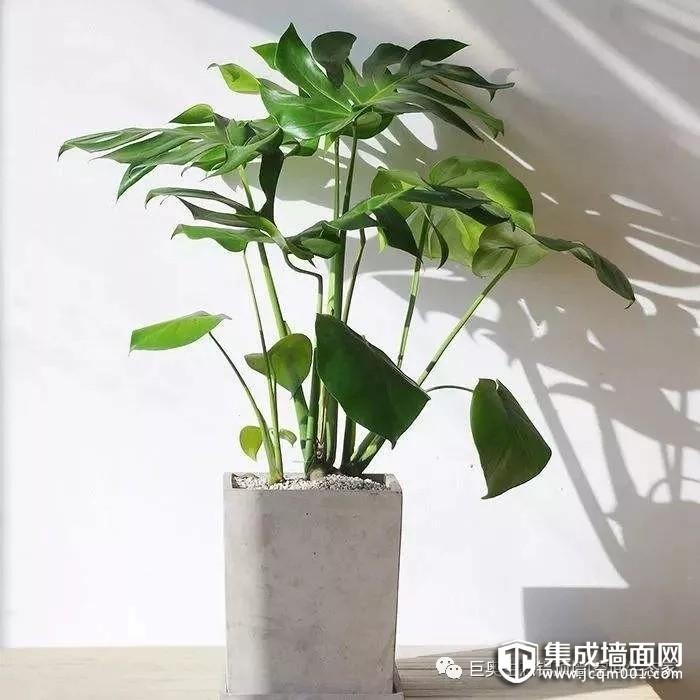 巨奥顶墙送来这些盆栽 为你的家居添一抹绿色的灵动感!