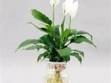 巨奥顶墙送来这些盆栽 为你的家居添一抹绿色的灵动感! (950播放)