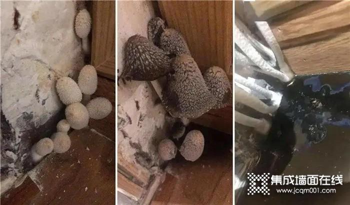 """海创竹木美学墙板,告别霉菌就是这么简单,从此无惧梅雨季""""折磨"""""""