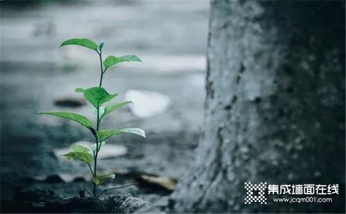 谷雨节气 欧派金典提醒您春将尽,夏将至!